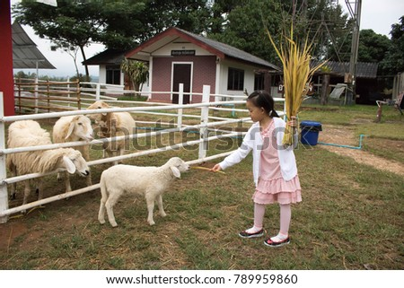 Chiangmai-Thailand. January,06,2018. Parents take the children to visit the sheep in a family vacation at Chao Phraya Police Station.