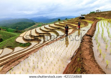 Chiangmai , thailand - July 25,2015 : Unidentified Hmong woman with rice field terrace background on July 18 ,2015 in Chiangmai , Thailand - stock photo