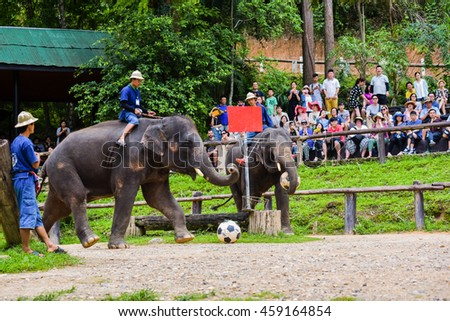 Chiangmai ,Thailand - June 18 : Elephant kick football to goal on  June 18 ,2016 at Mae Sa elephant camp ,Chiangmai ,Thailand