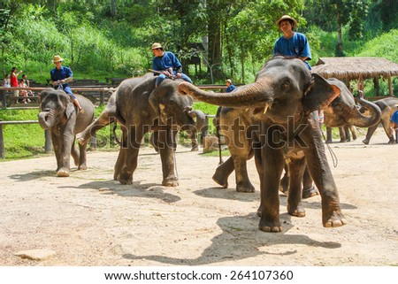 CHIANGMAI THAILAND 01 MAR 15 elephant Showing at The young Elephant school on 01 March, 2015 in Chiangmai, THAILAND - stock photo