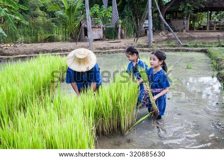 CHIANGMAI THAILAND : 25 SEPTEMBER 2015 farmer and kids  will  rice planting in rice field at Chiangmai Thailand - stock photo