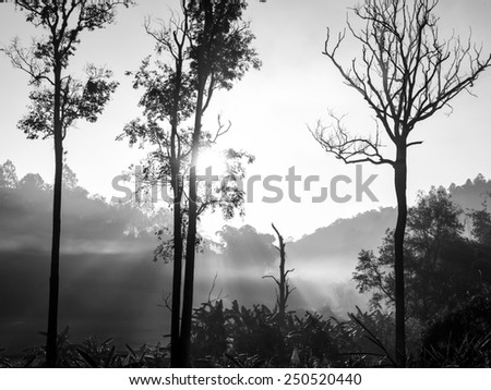 Chiangmai valley hills in the mist in the morning, northern Thailand - black and white - stock photo