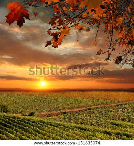 Chianti vineyard landscape in Tuscany, Italy - stock photo