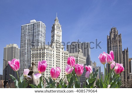 Chicago downtown with pink flowers in front - stock photo