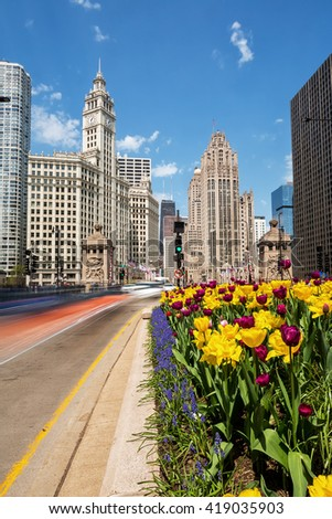 CHICAGO, IL - 6 MAY: Tulips bloom along Michigan Avenue in downtown Chicago.