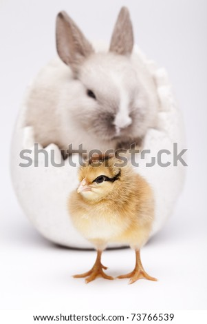 Chick and bunny, - stock photo