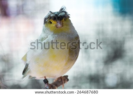 Chick in hands of a man - stock photo