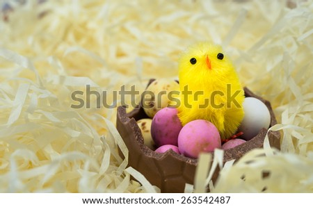 Chick just hatched sitting on easter eggs