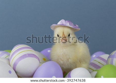 Chick with a hat on Easter eggs - stock photo