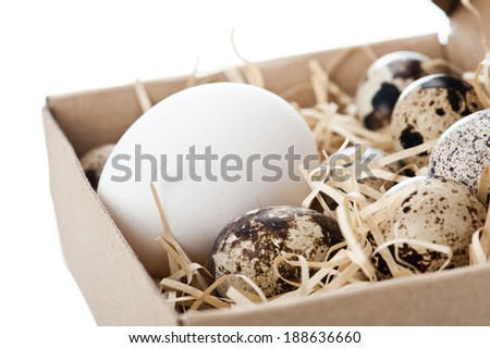 Chicken egg and quail eggs in box - stock photo