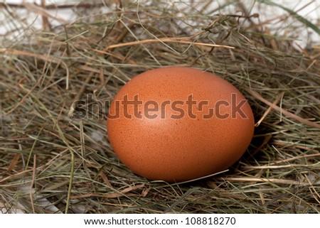 Chicken egg in nest. Close-up view. - stock photo