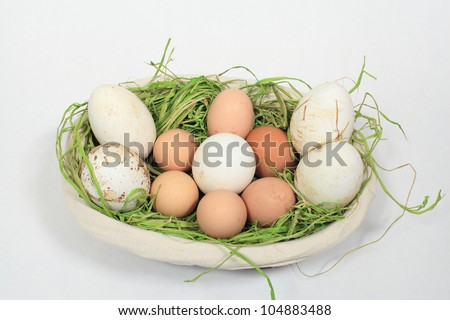 chicken eggs and goose mixed in a basket - stock photo