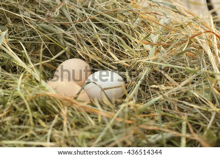 Chicken eggs in hay nest at outdoor (white balance is incorrect)