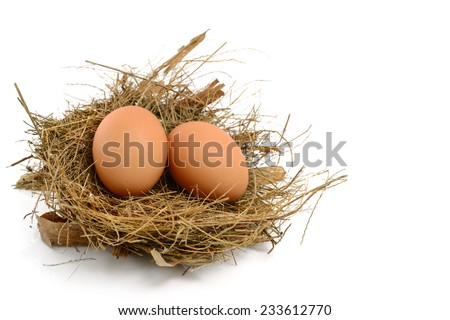 chicken eggs in nest - stock photo