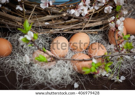Chicken eggs on hay and blossoming branch