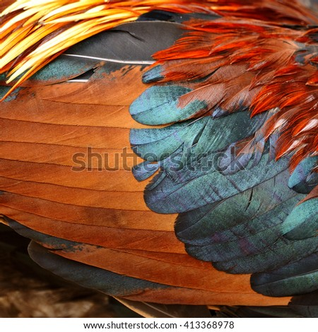 Chicken feather - stock photo