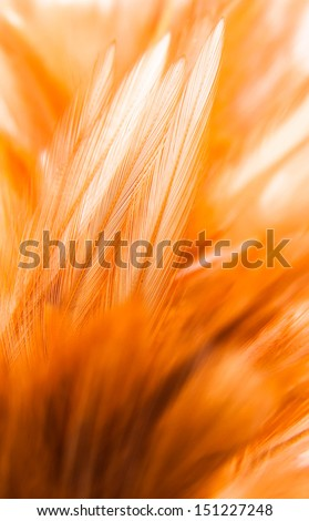 chicken feather texture - stock photo
