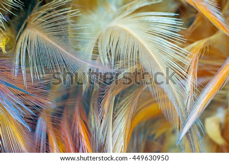 chicken feather vintage texture background