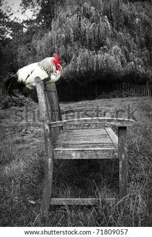 Chicken on a Bench - stock photo