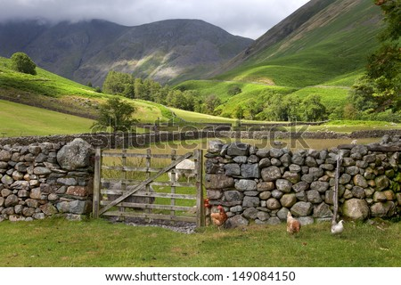 Chickens and sheep at Wasdale Head, Cumbria, England - stock photo