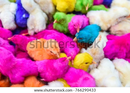 chickens colored babies a group of funny colorful easter chicks