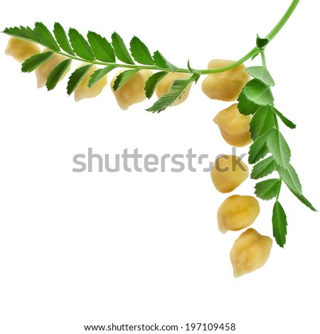 Chickpea plant with seed close up, corner border, isolated on white background - stock photo