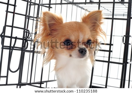 chihuahua closed inside pet carrier isolated on white background - stock photo