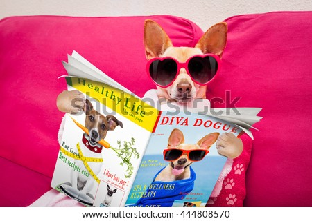 chihuahua  dog at spa wellness center relaxing   reading a magazine or newspaper - stock photo