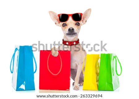chihuahua dog holding a shopping bag ready for discount and sale at the  mall, isolated on white background - stock photo