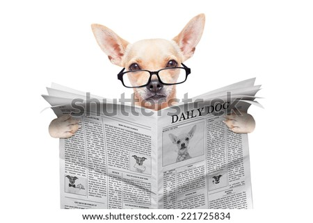 chihuahua dog reading the news on a magazine or newspaper , isolated on white background - stock photo