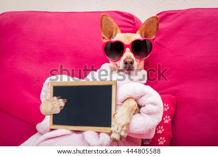 chihuahua dog relaxing  and lying,at spa wellness center ,wearing a  bathrobe and funny sunglasses with blackboard  - stock photo