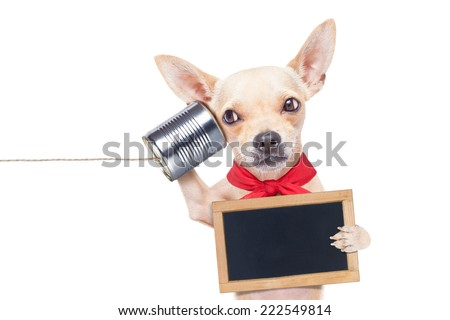 chihuahua dog talking on the phone surprised, holding a blank blackboard, isolated on white background - stock photo