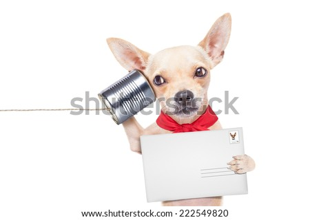 chihuahua dog talking on the phone surprised, holding a blank envelope - stock photo