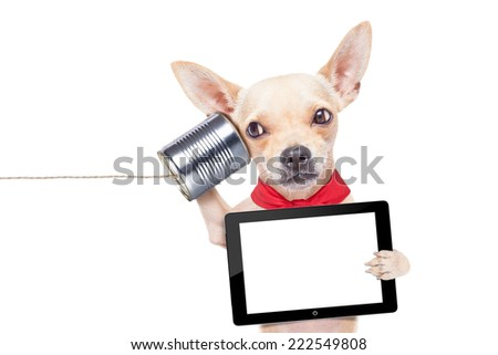 chihuahua dog talking on the phone surprised, holding a blank tablet pc, isolated on white background - stock photo