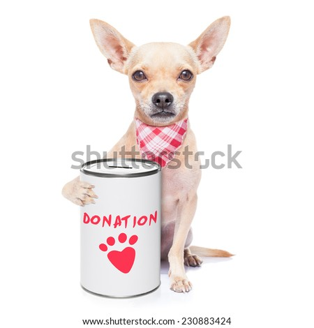 chihuahua dog with a donation can , collecting money for  charity, isolated on white background - stock photo