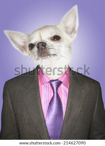 Chihuahua dressed business man - stock photo