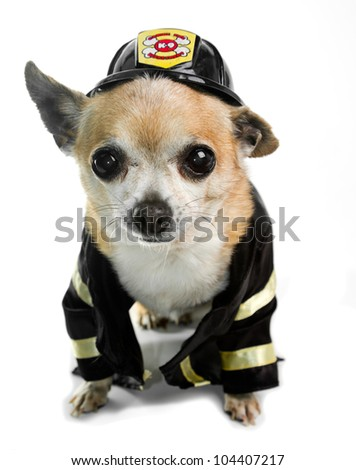 Chihuahua Firefighter