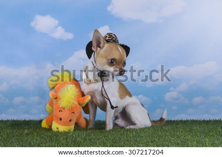 Chihuahua puppy playing in the grass on a sunny day