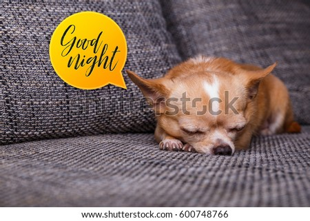 Wonderful Chihuahua Canine Adorable Dog - stock-photo-chihuahua-puppy-sleep-good-night-speech-bubble-adorable-dog-lying-on-sofa-cute-looking-purebred-600748766  Gallery_968830  .jpg