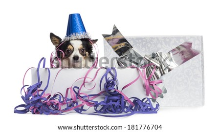 Chihuahua wearing a party hat in a present box with streamers, looking at the camera, isolated on white - stock photo