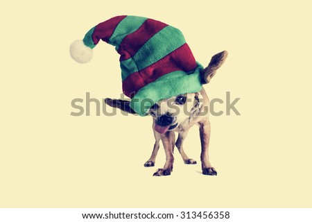 chihuahua wearing a santa hat with a toned retro instagram filter with a shallow depth of field