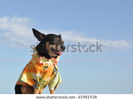 Chihuahua With Tropical Shirt And Lei