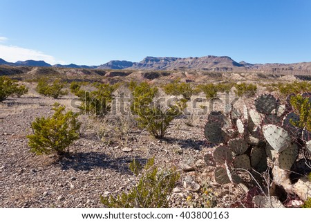 Chihuahuan Desert landscape of Big Bend Ranch State Park, Texas, US, with creosote bushes and purple prickly pear cactus on rocky ground