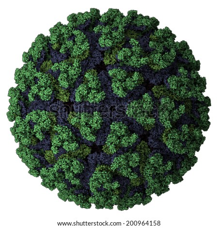Chikungunya virus. Causes chikungunya disease. Transmitted by Aedes mosquitoes. Atomic-level structure. - stock photo
