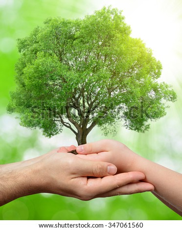 Child and male hands holding a tree on green natural background - stock photo
