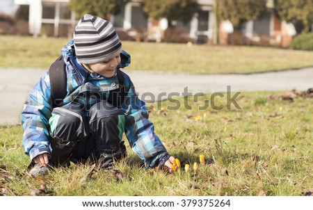 Child boy looking at first spring flowers in the grass