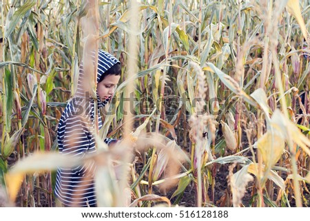 Child boy walking in a corn field in autumn