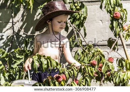child collects in the garden peaches