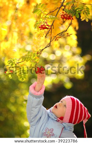 Child considers rowan berry - stock photo