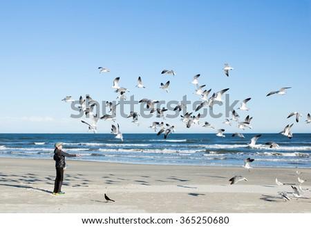Child feeding seagulls on the sea background. Gulf of Mexico, Texas - stock photo